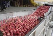 qx-6米-蔬菜清洗机 大枣生产线 净菜生产线  水果生产线
