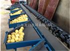 XGJ-NM柠檬重量分选机 全自动重量选果机 柠檬水洗打蜡分选流水线
