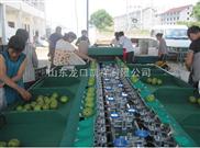 苹果选果机 水果自动分选选果机 凯祥水果分级机专业水准